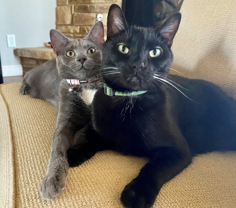 Black and grey cat sitting together